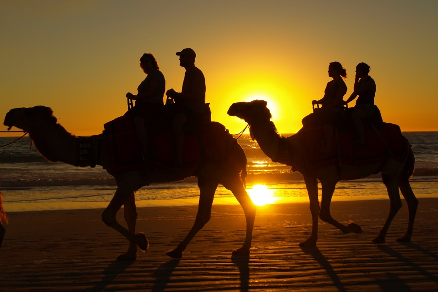 cabo tours, camel riding in cabo, los cabos agent, nick fong